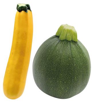 オーラム(左)、丸ズッキーニ(右)